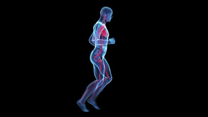 transparent jogger animation - visible vascular system