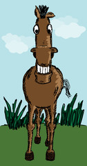 Funny horse sketch
