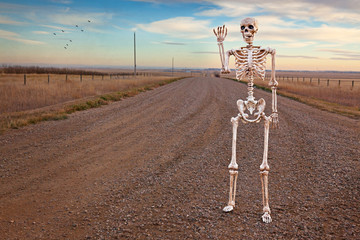 Country Roads Skeleton