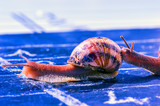 snail finish encouraged by its congener poster