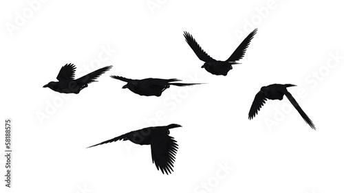 鳥のシルエット