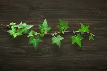 Wood background with ivy