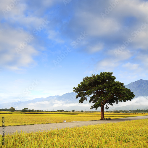 Rural scenery of green farm under nice sky, landscape , Taiwan