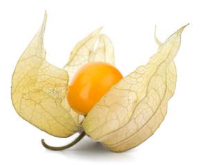 Physalis fruit isolated on white background