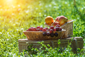 Picnic basket with fruits in green park