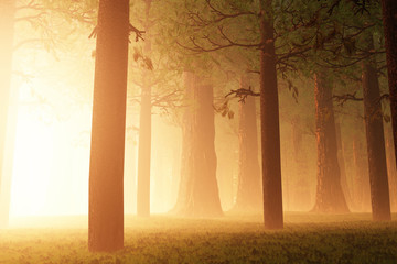 Deep Forest Fairy Tale Scary Scene 3D render