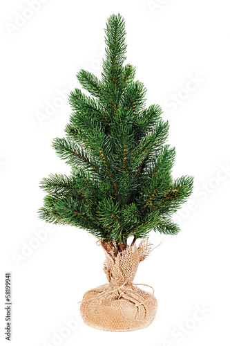 Fir tree for Christmas isolated on white background.