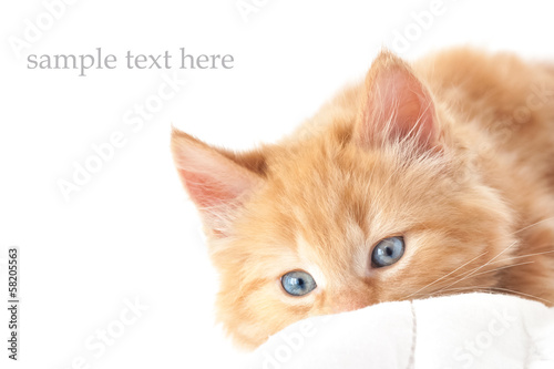 playful blue-eyed kitten on white with text space