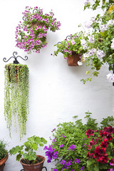 Wall with flowers pots.