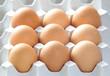 Chicken brown eggs