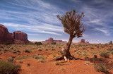 Baum im Monument Valley - USA