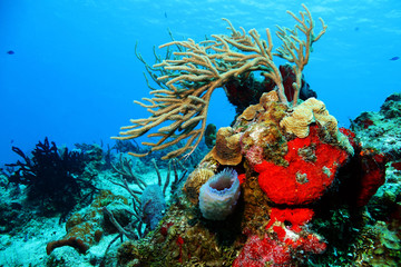 Corals against Blue Water, Cozumel, Mexico