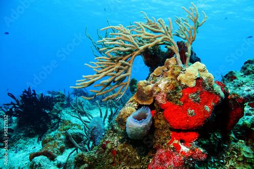 Fotobehang Koraalriffen Corals against Blue Water, Cozumel, Mexico