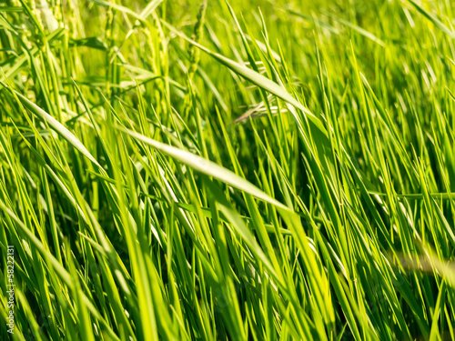 Fototapeten,gras,grün,wiese,textur