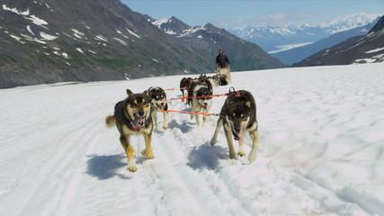 View of dogsledding Chugach Mountains, Alaska,
