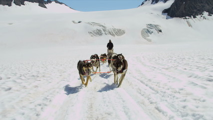 Dogsledding team in motion high mountain pass, Alaska