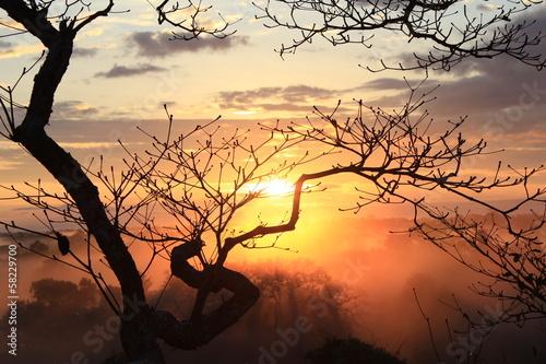 Fototapeten,amazonas,wald,himmel,lebensabend