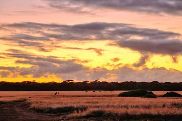 The Nullarbor Plain, Australia