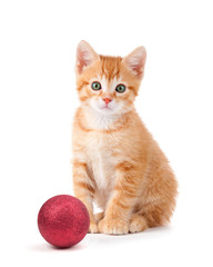 Cute orange kitten with large paws sitting next to a Christmas O