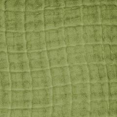 fragment of snake skin