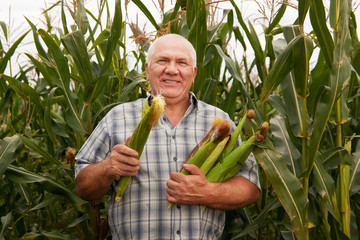 Senior man in corn field