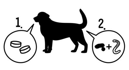 犬の寄生虫退治