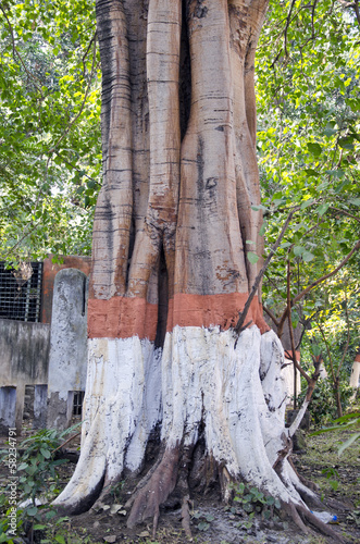 painted big tree trunk in Amritsar park,India