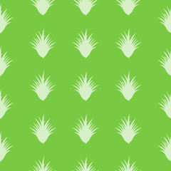 seamless Aloe Vera pattern with special design