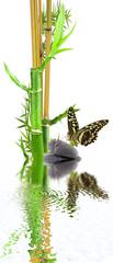 bambous et papillon sur galets