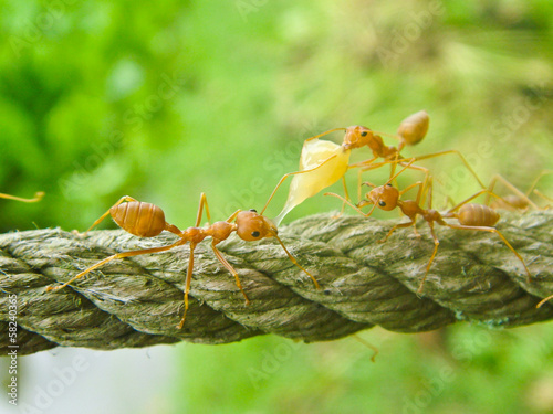 Ants are working and climbed on rope
