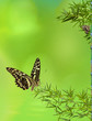 composition nature, bambou et papillons
