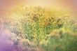 Beautiful wild meadow flowers