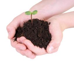 Junge Pflanze in Händen