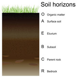 Vector illustration of soil horizons (layers)