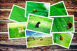 pile of green nature pictures on wooden table