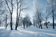 canvas print picture - winter landscape