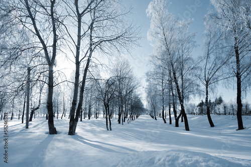 canvas print picture winter landscape