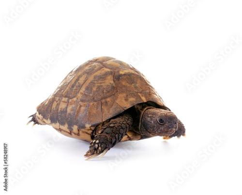 Fotobehang Schildpad Schildkröte