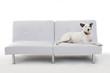 canvas print picture - Hund auf der Couch