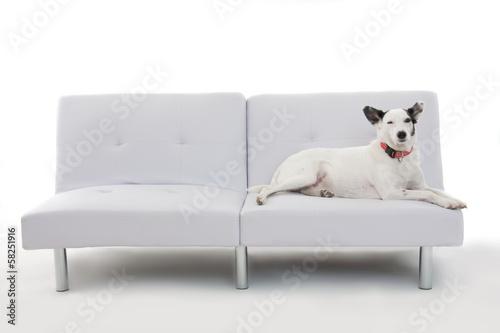 canvas print picture Hund auf der Couch
