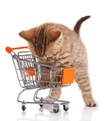 british cat with shopping cart isolated on white. kitten osolate