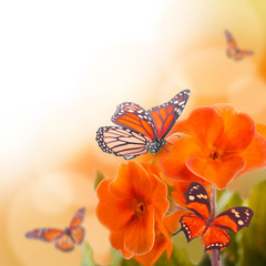 Yellow flowers and butterfly, a spring primrose © seqoya