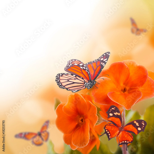 Foto op Canvas Lente Yellow flowers and butterfly, a spring primrose
