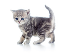 Lustige Walking Kitten isoliert auf weiß