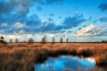 blue sky reflected in bog water