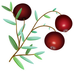 Branch of ripe red cranberries with leaves