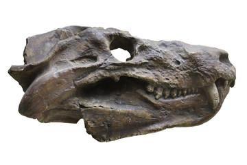 dinosaur's skull