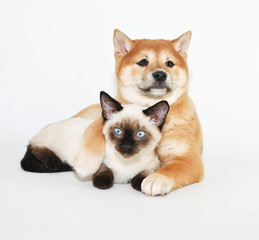 Puppy and Kitten Friends