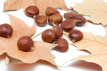 chestnuts and leaves
