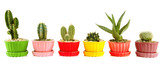 Cactuses in flowerpots, isolated on white